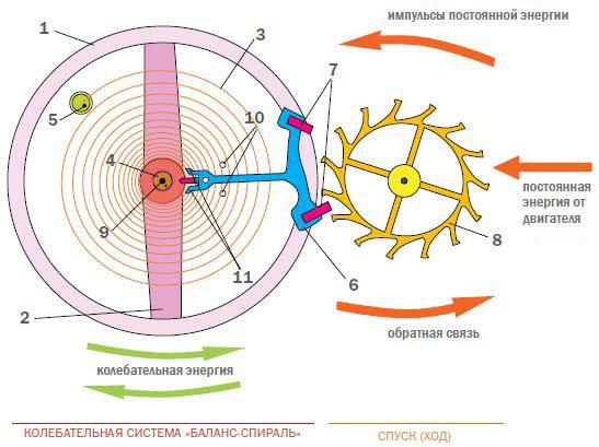 Рис. 1. Система «баланс-спираль» во взаимодействии с часовым спуском
